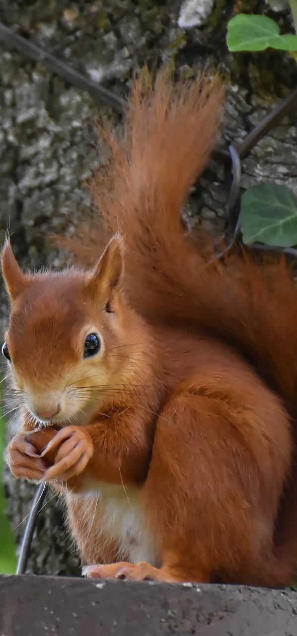A cute squirrel.