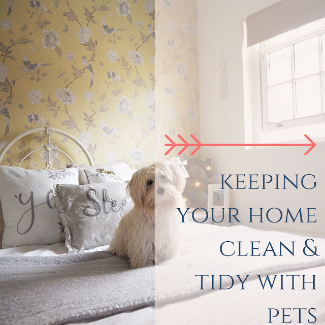 Keeping your home clean and tidy with pets from dovecottageblog.com