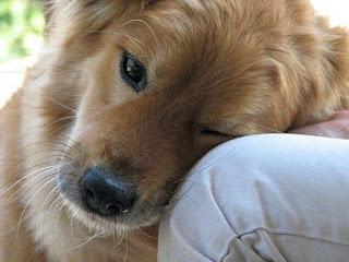 Смотреть фото про собак