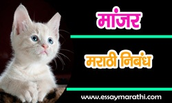 my-pet-cat-essay-in-marathi