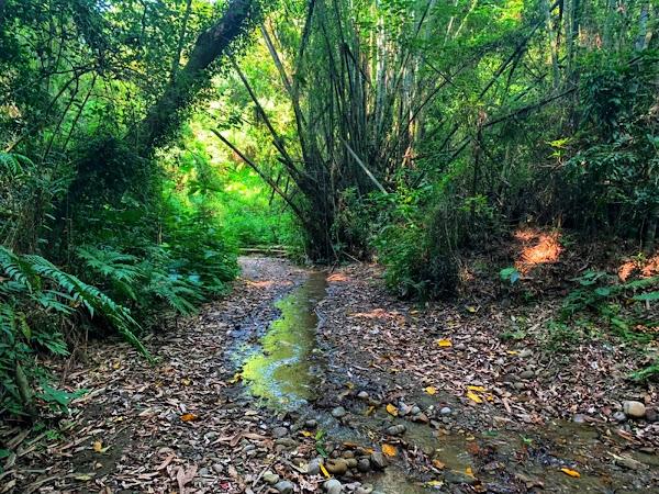 彰化市石牌坑親水生態步道 友善理念獲建築園冶獎