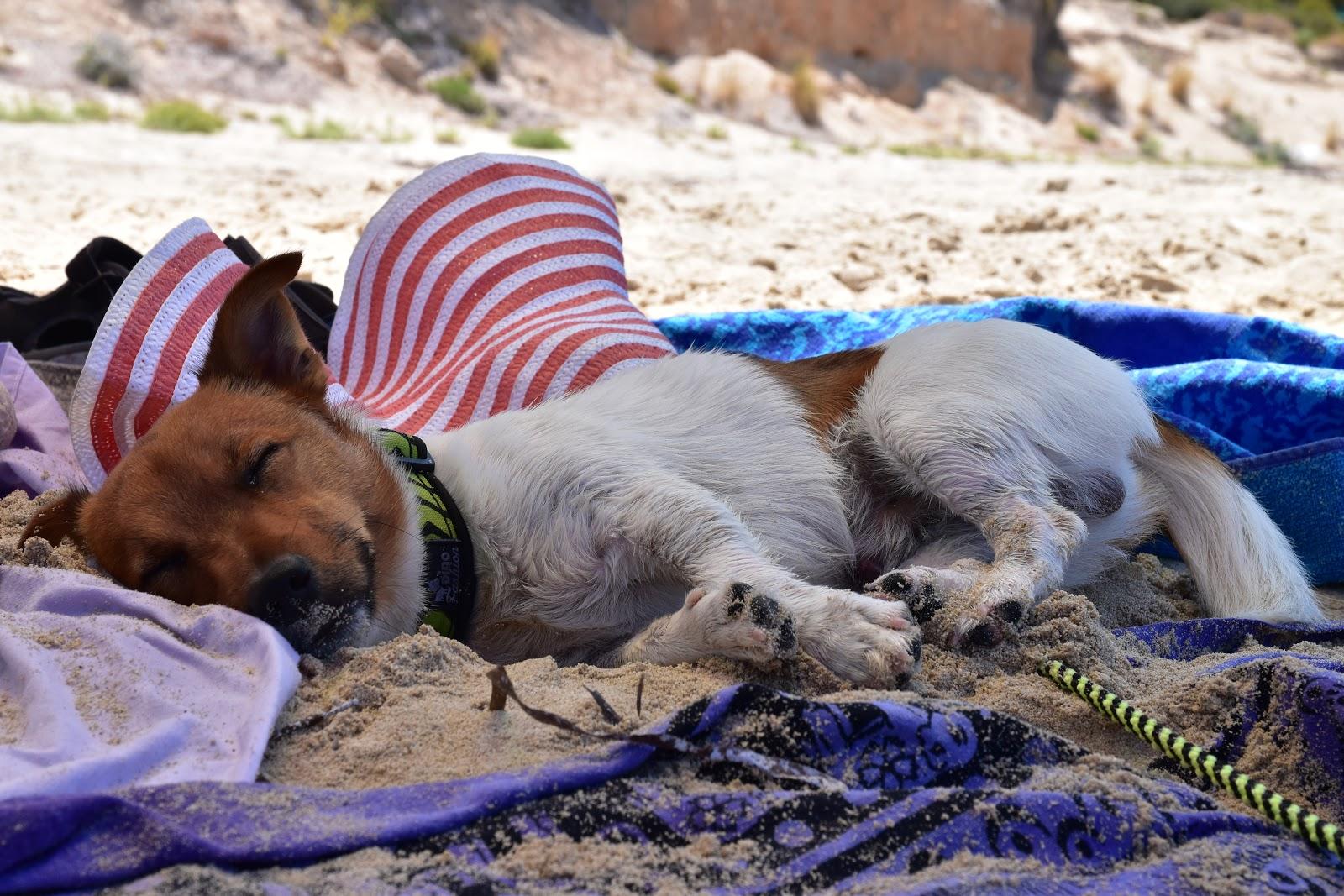 spící pes na pláží v Řecku