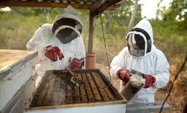 bee farming, bee harvesting