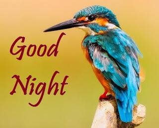 good night with bird