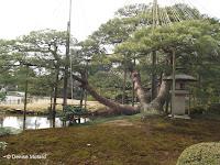 Permanent supports and yukitsuri (winter protection) - Kenroku-en Garden, Japan