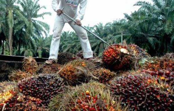 increases palm oil production