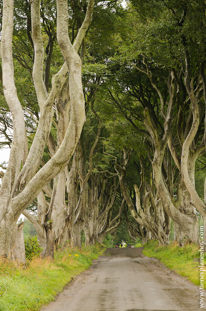 Dark Hedges Irlanda del Norte