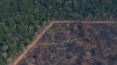 Deforestation reaches highest level in a decade in the Brazilian Amazon