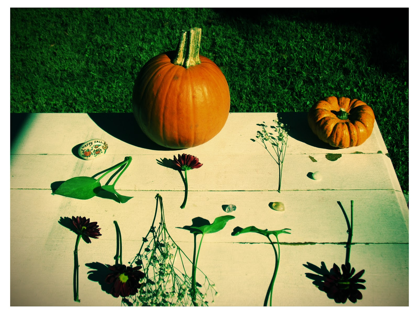 Warm, autumn pumpkin tabletop display in mother nature in Florida