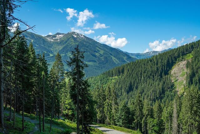 Waldwandern in Saalbach | Wanderung zu den Waldteichen am Maisereck | Saalbach - Maisalm - Wirtsalm - Waldteiche - Spielberghaus - Saalbach | Wandern-SalzburgerLand 05
