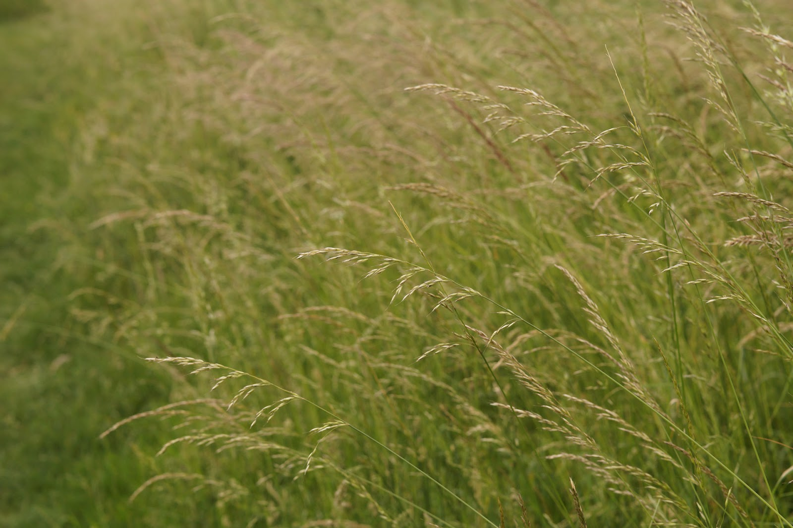 The whispering long grass sophie in the sticks for Like long grasses