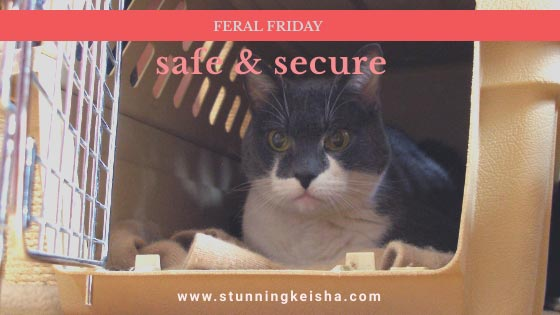 Feral Friday—Safe & Secure