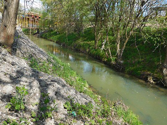 Rzeka Wilga.
