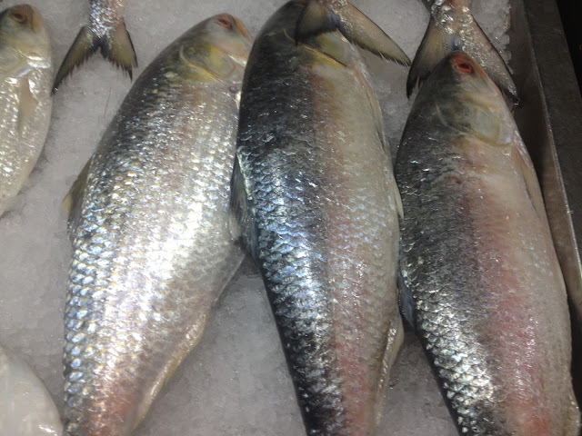 Hilsa fish from Bangladesh