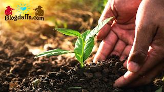 Cara menyuburkan tanah di rumah