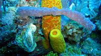 Sponge animal pictures_Porifera