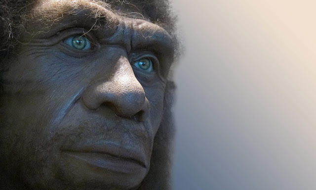 Declining fertility rates may explain Neanderthal extinction, suggests new model