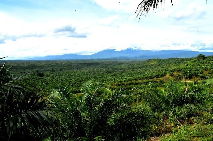 Tanah 32 tahun kuasai PT Bio tidak Memberikan Kontibusi Kesejahteraan apa untuk Rakyat di Desa Penyangga.
