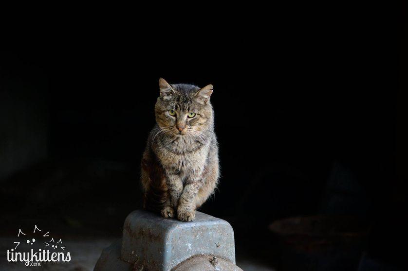 Cat Defender: July 2017