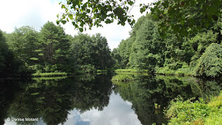Roosevelt Forest pond with the moving island in the middle - Stratford, CT