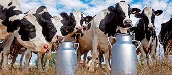 Consejo Nacional de Investigaciones Agropecuarias propone cumbre para evaluar sector lechero