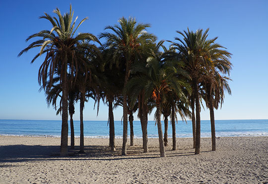 palm trees, beach, Spain, travel photography, travel, europe, photos, holiday,