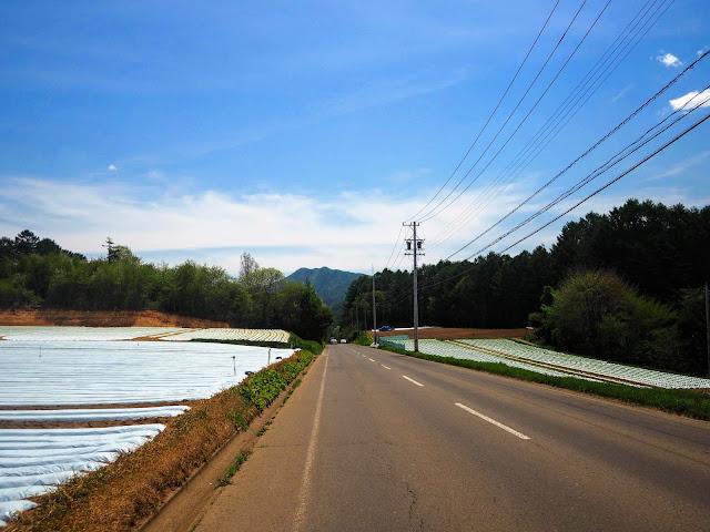 川上村 レタス街道