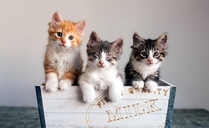 Finding Good Homes for Kittens