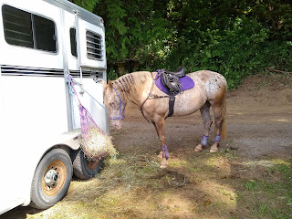 A light tan spotted horse with purple matching tack stands at a horse trailer in front of a hay bag.