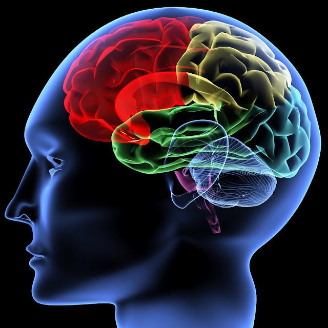 """Pengenalan Cara Belajar """"MID-BRAIN""""(Otak Tengah)"""