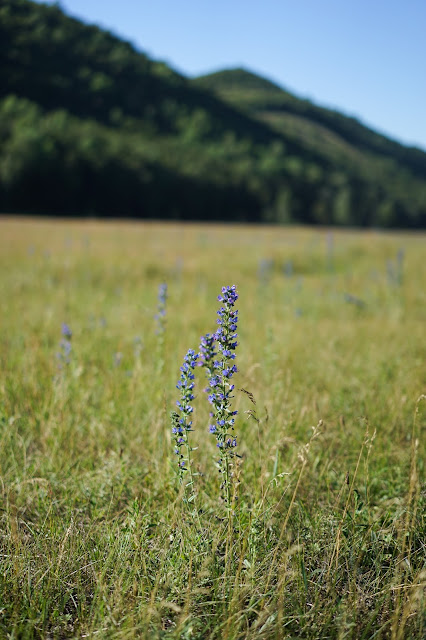 цветок на фоне гор