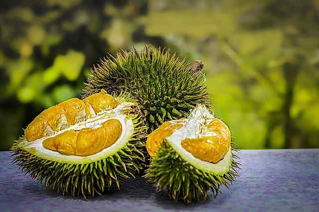 Interesting Durian fruit facts