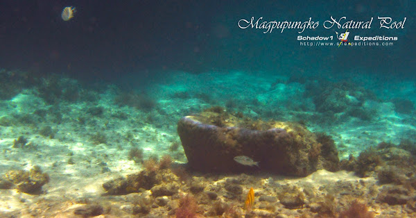 Magpupungko Pool Underwater Siargao - Schadow1 Expeditions