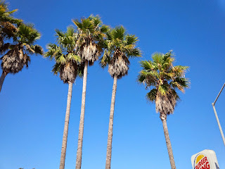Palm trees against a blue, cloudless sky. The sun is out.