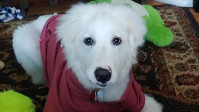 Бдительный щенок спас хозяев от пожара в доме