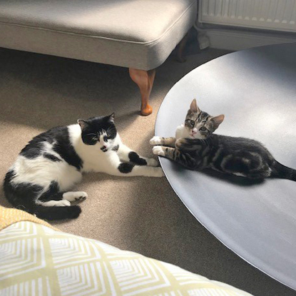 black-and-white cat and tabby-and-white kitten laying near each other