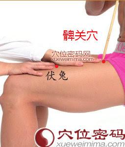 髀關穴位 | 髀關穴痛位置 - 穴道按摩經絡圖解 | Source:xueweitu.iiyun.com
