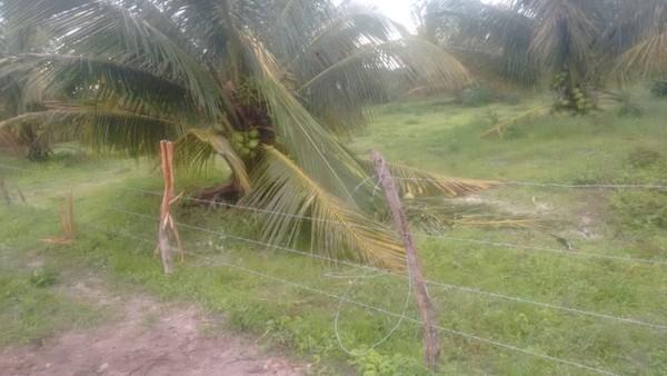 Agricultor morre ao ser atingido por raio em Itarema, no Ceará