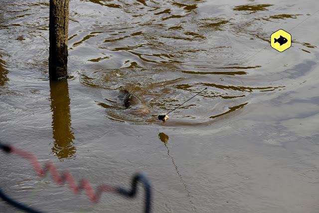 Flusskarpfen Angelurlaub