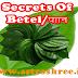 Secrets Of Paan or Betel Plant