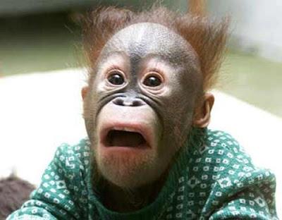 scared surprised baby monkey photo