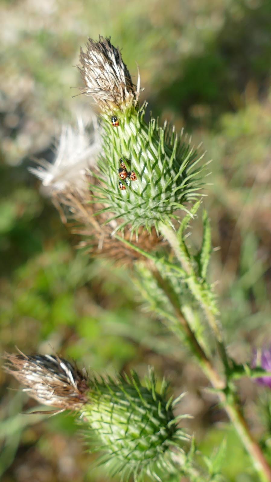 Nos b b tes petit insecte rouge et noir punaise - Insecte rouge et noir ...