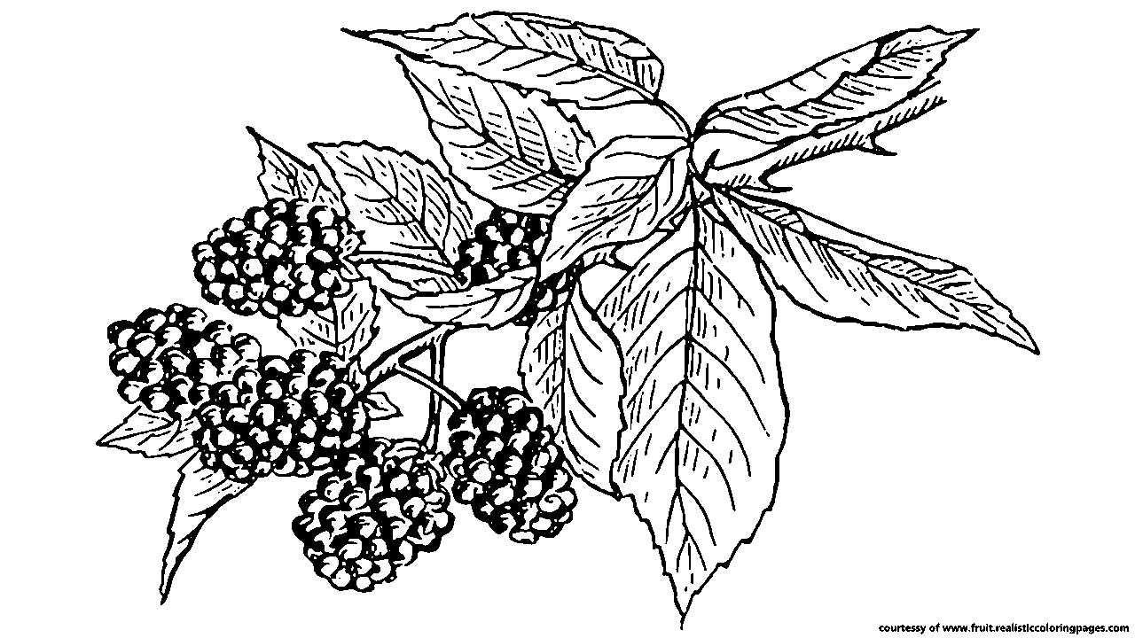 free 7 awesome blackberry fruit clipart fruit names a z with