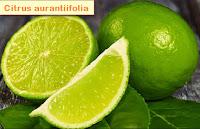 Cough Remedies Natural