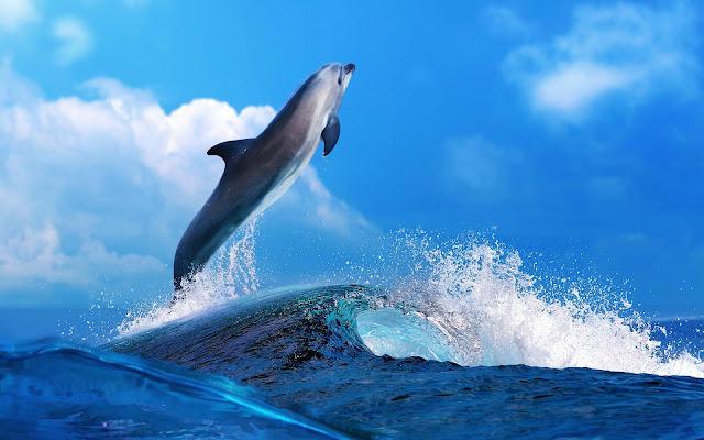 Dolfijn wallpaper met springende dolfijn