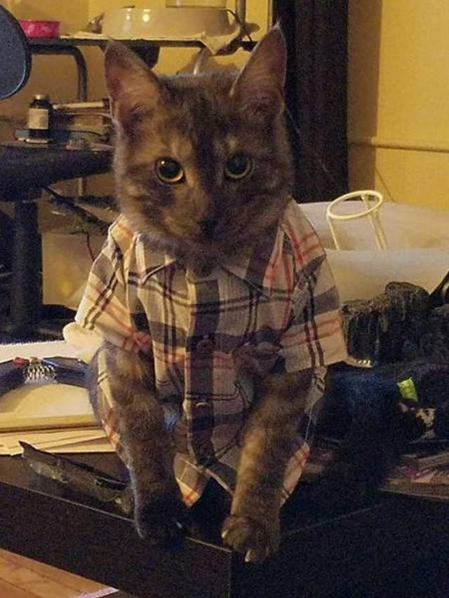 Funny cats - part 260, funny cat image, cute cat pictures