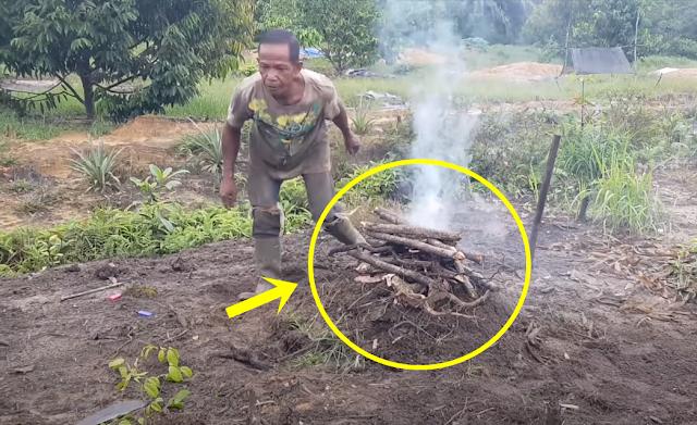 Cara Mempercepat Pertumbuhan Pohon Durian dengan Tanah Bakar, Tak Perlu Siram lagi Hingga 7 Tahun!