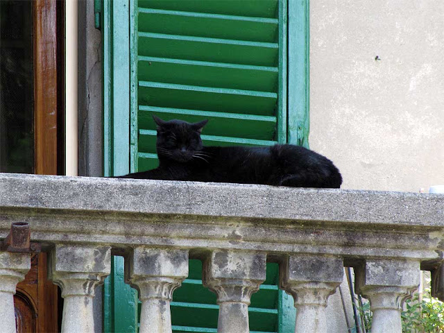 Cat on a balcony, via San Zeno, Pisa