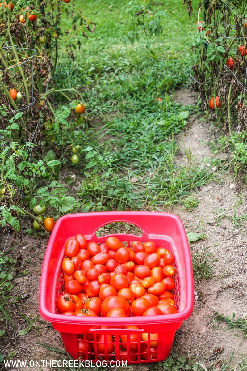 garden fresh tomatoes | On The Creek Blog