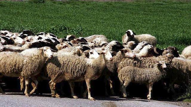 Κτηνοτρόφοι: Όλοι μαζί και ο ψωριάρης χώρια
